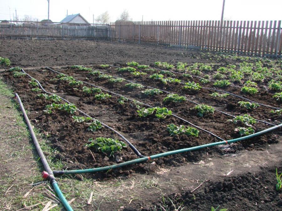 Полив огорода оборудование своими руками
